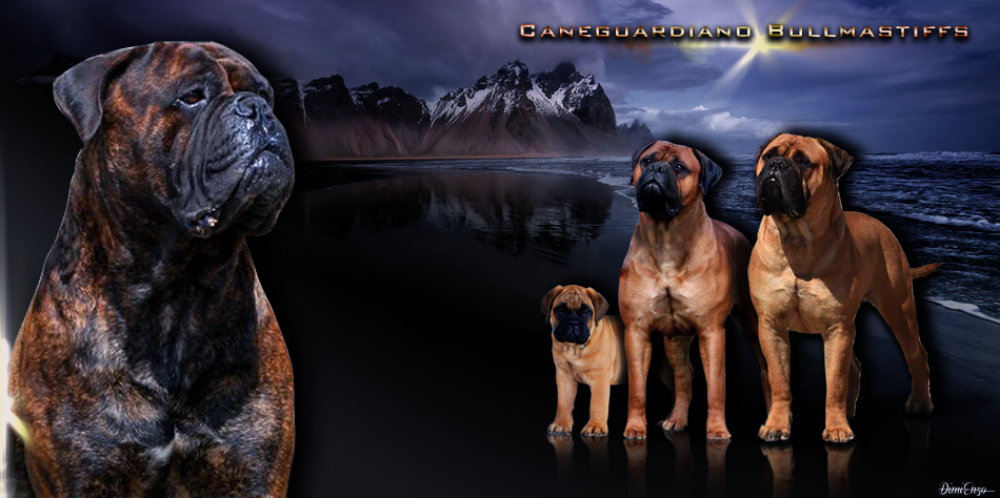 Caneguardiano Bullmastiffs & French Bulldogs